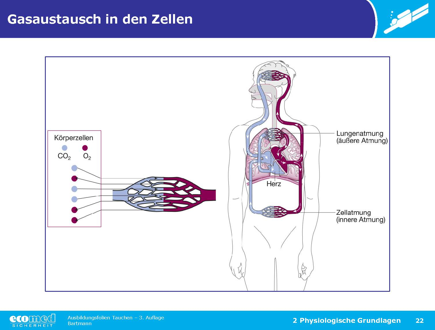 Fein äußeree Anatomie Des Herzens Ideen - Anatomie Von Menschlichen ...